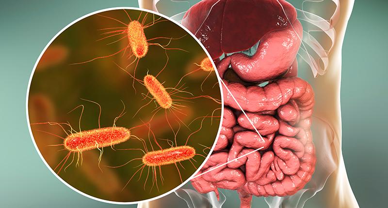 Enfermedades no transmisibles y microbioma humano